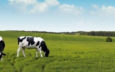 Cattlechain: Traceability, Grazing, and Precision Livestock in Galicia